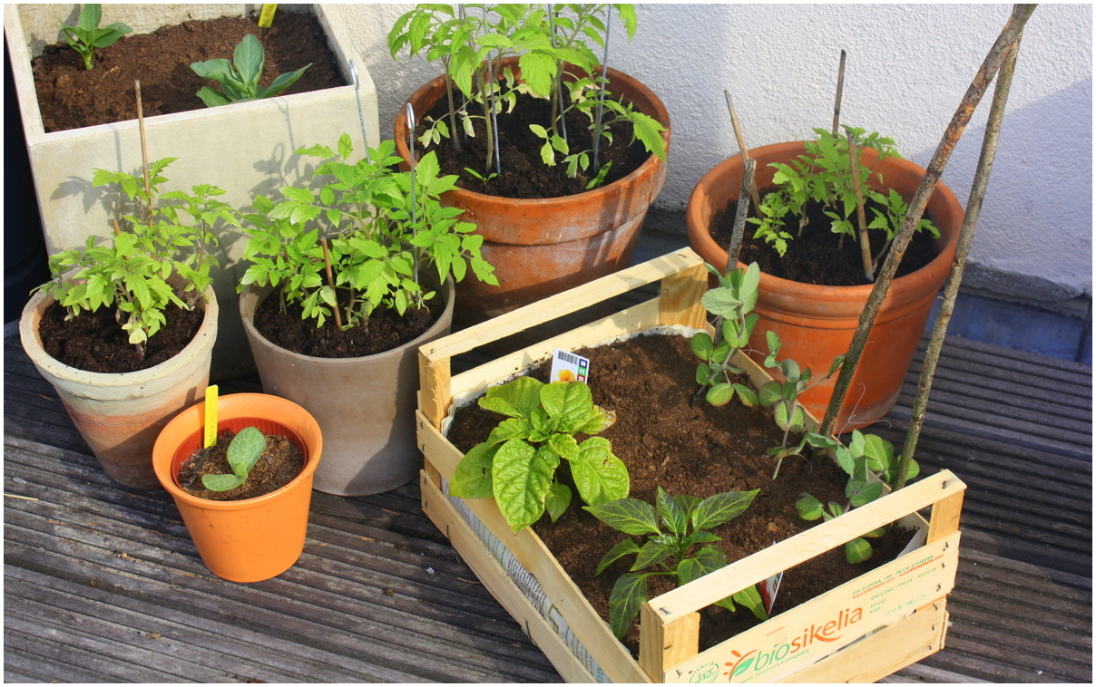 jardin-de-balcon